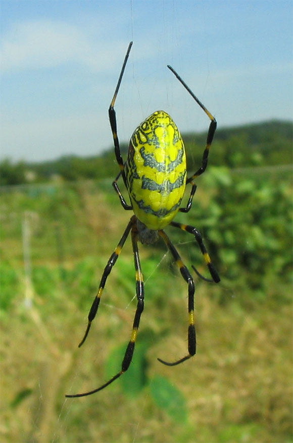 이름모를 거미